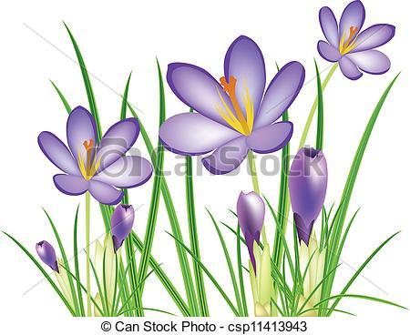 Wildflower clipart crocus Crocus spring of illus