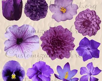 Buttercup clipart african violet Violet Crocus Petunia Etsy clipart
