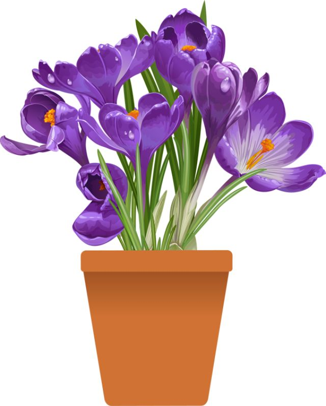Petal clipart potted flower Beautiful spring PLANTS Clip the