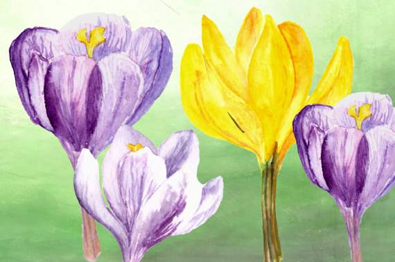 Crocus clipart spring flower File Spring Watercolor is a