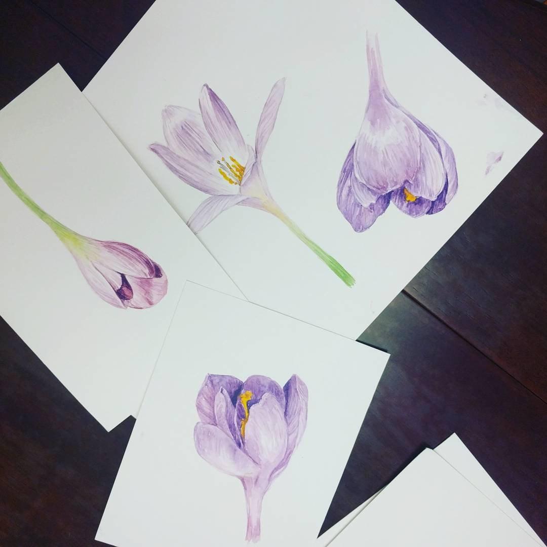 Crocus clipart spring flower Clipart 600 scrapbooking PNG spring