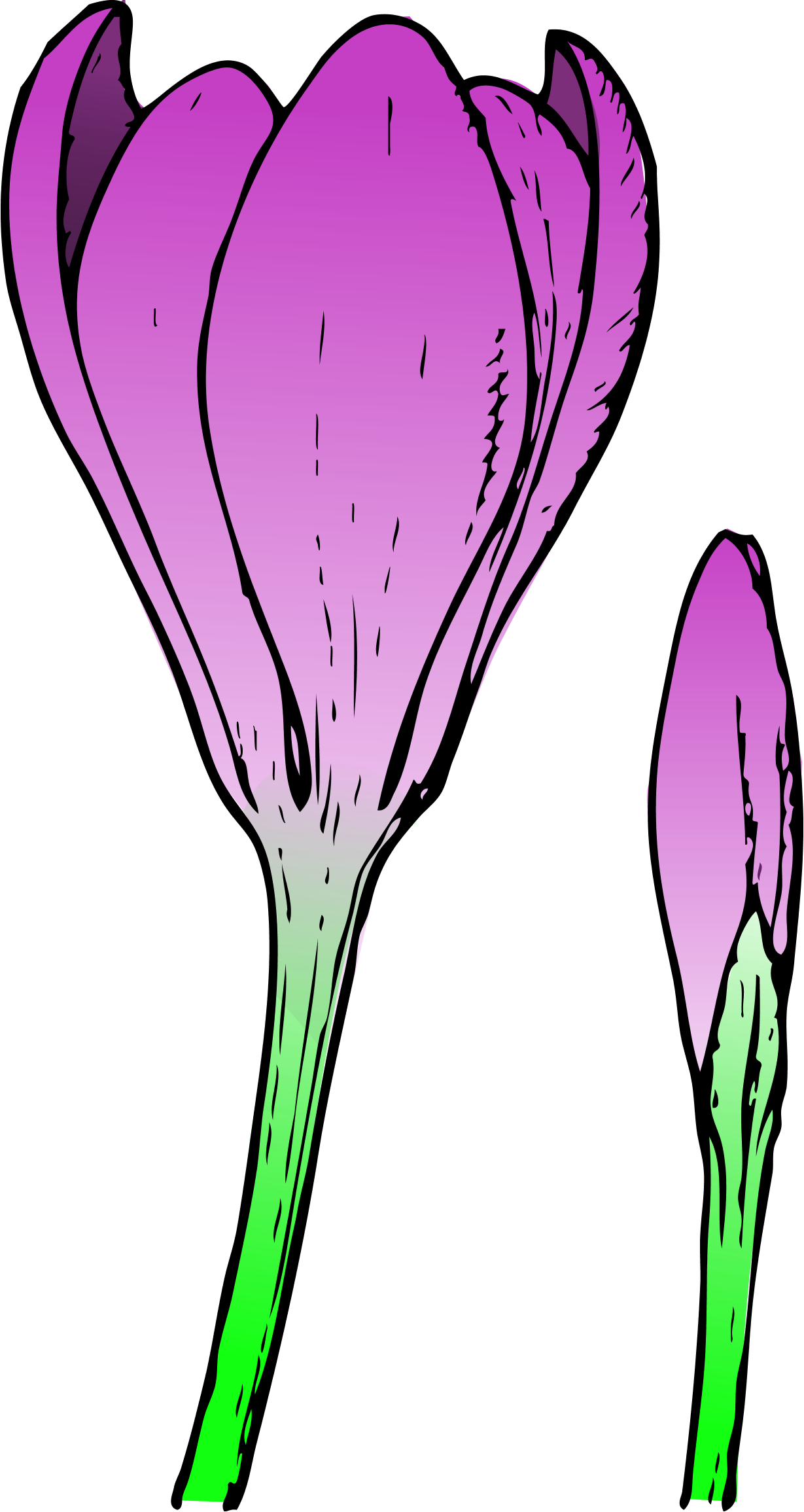 Crocus clipart spring flower Clipart Drawings Spring For Spring
