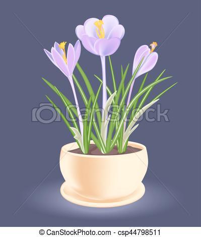 Crocus clipart spring flower Flowerpot Violet a crocus flower