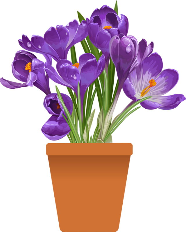 Plant clipart flowering plant Spring of  for the
