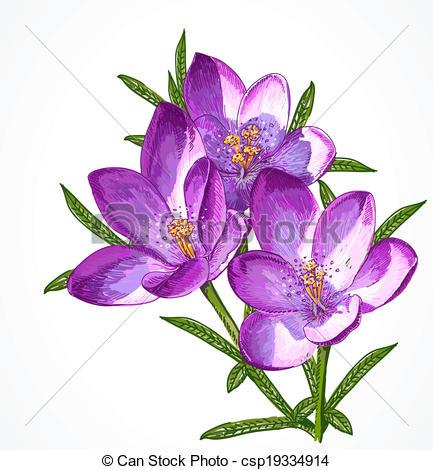 Crocus clipart spring flower Flowers for for design Vector