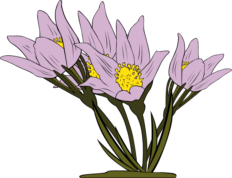Wildflower clipart crocus & Use Domain Patens Clip