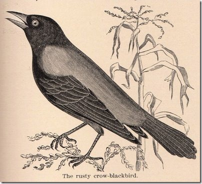 Crow clipart october Nelson's of and Best Books