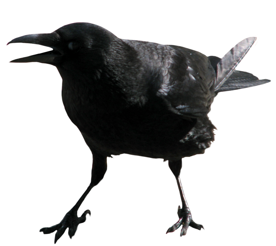 Crow clipart transparent background PNG image Crow PNG background