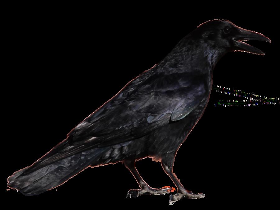 Crow clipart transparent background Twenty two Raven Search crow