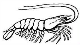 Crustacean clipart Free Crustacean Shell Shell Crustacean