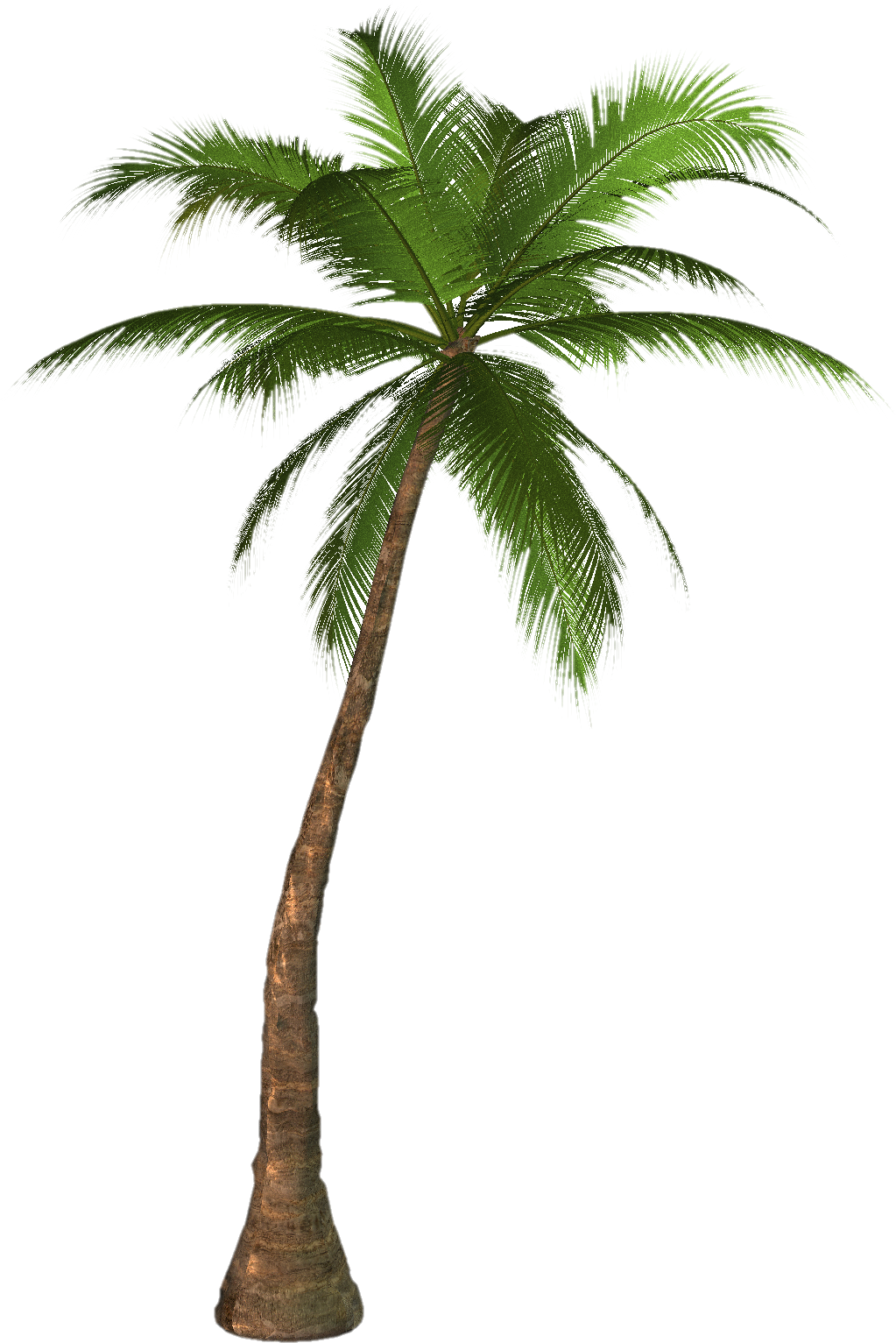 Palm Tree clipart real Images Gift download on Palm