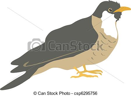 Cuckoo clipart long tailed Vector Vector Art  cuckoo