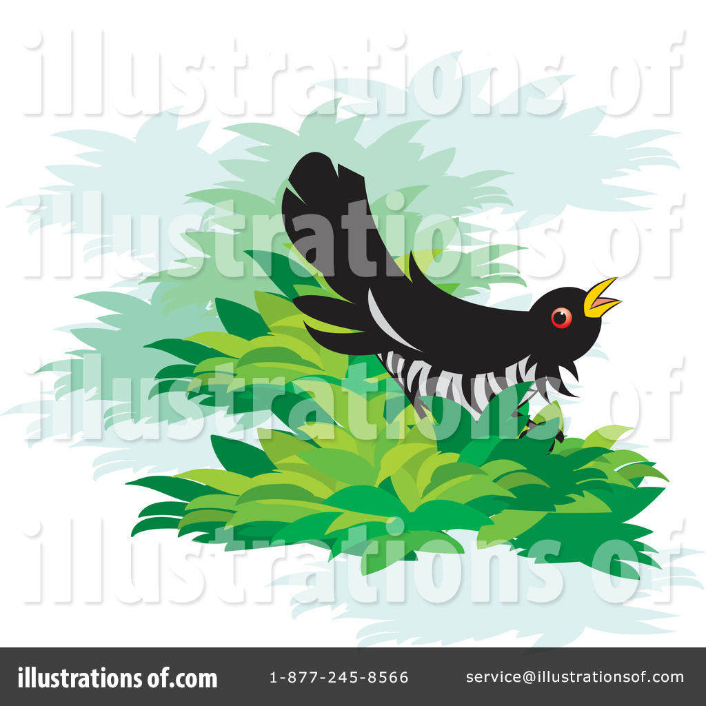 Cuckoo clipart long tailed Royalty by Bird Cuckoo Clipart