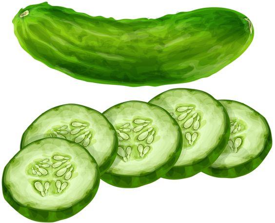 Cucumber clipart Art com Cucumber  NiceClipart