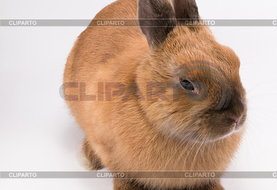 Cuddle clipart brown bunny 벡터 little 아트 on /