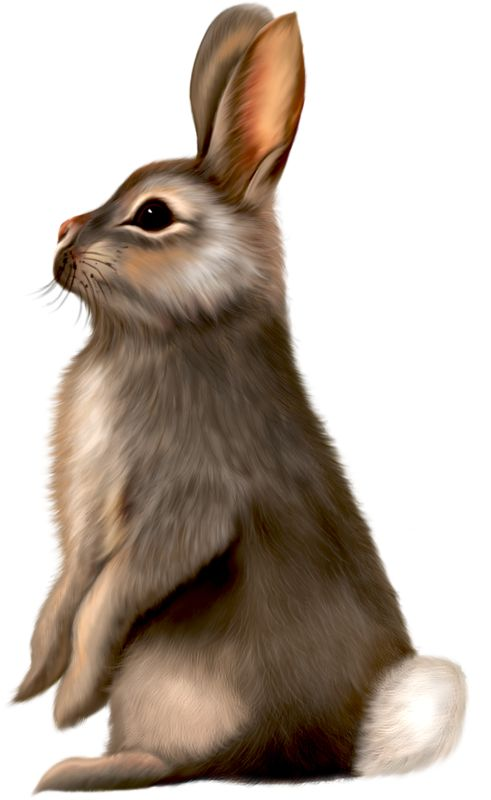 Cuddle clipart brown bunny Painted 108 Clipart on images