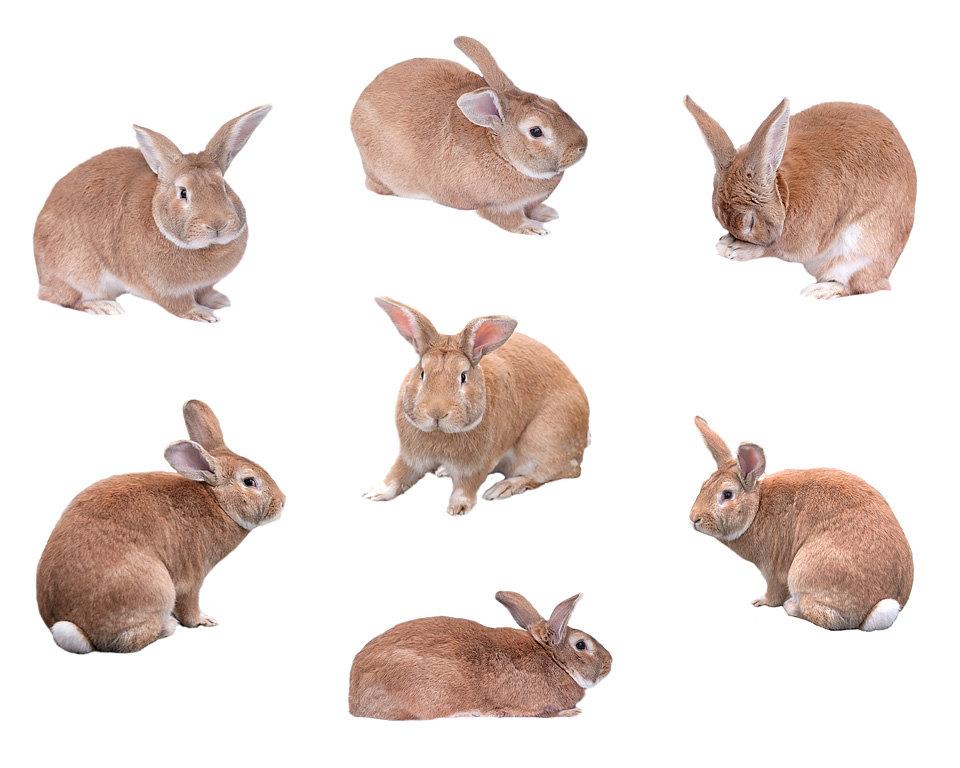 Cuddle clipart spring bunny Bunny 7 files spring Rabbit
