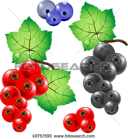 Currants clipart Currant clipart Clipart of currant