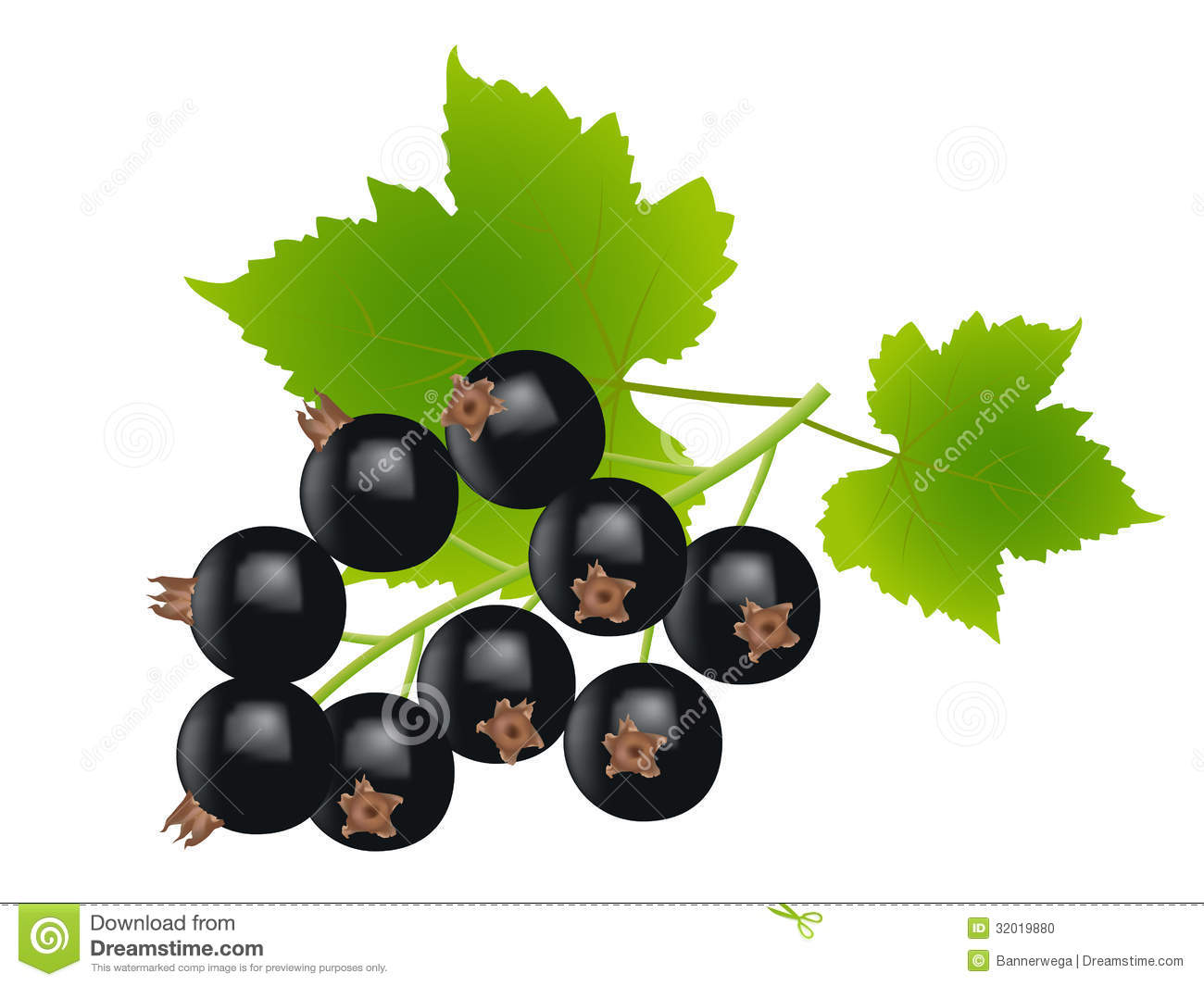 Currants clipart Currants clipart Black Currant Stock