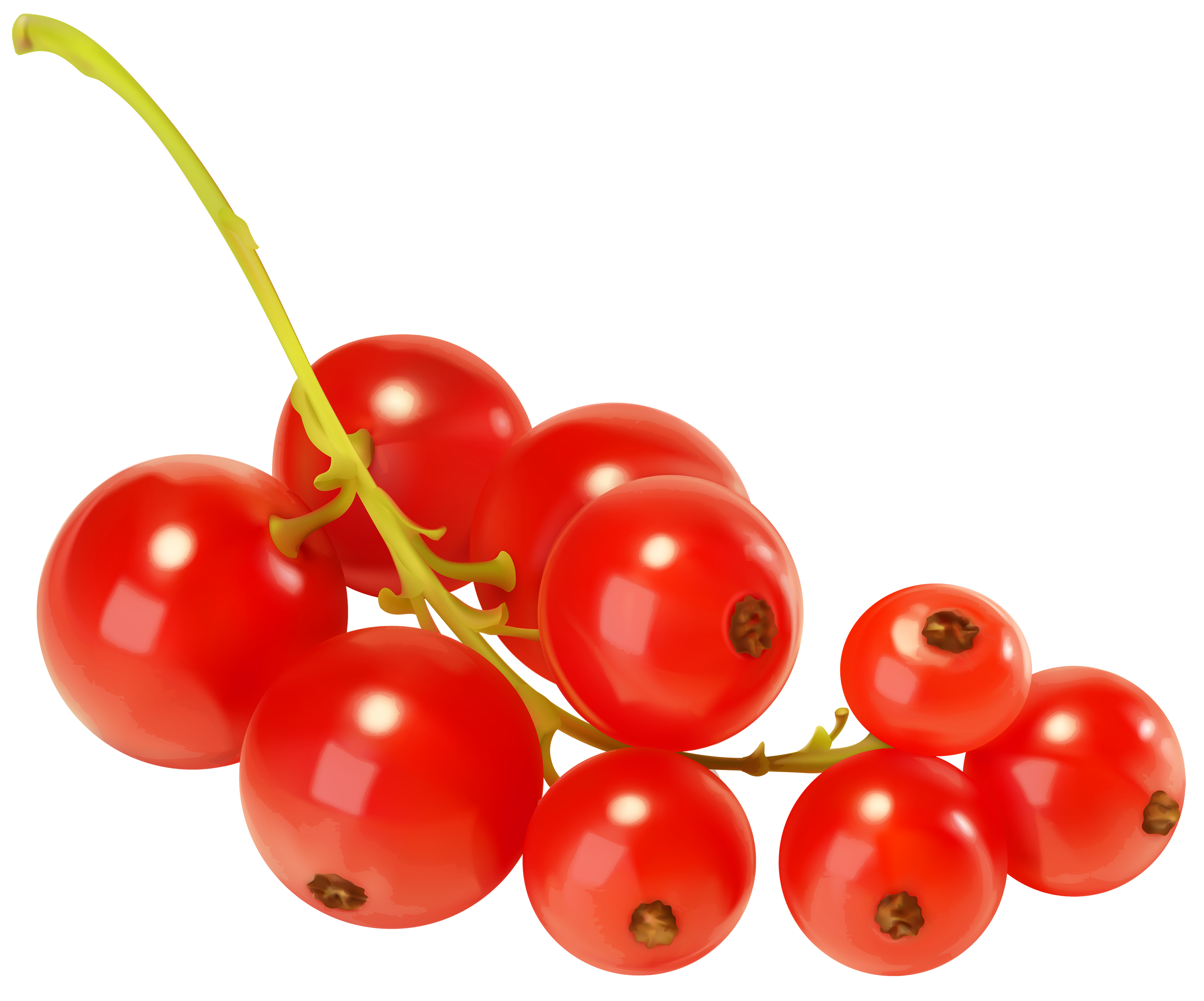 Currants clipart Currants clipart Red Currants PNG