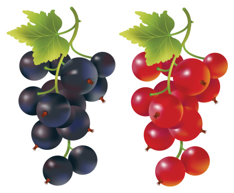 Currants clipart Vector Images Currant Black Currant