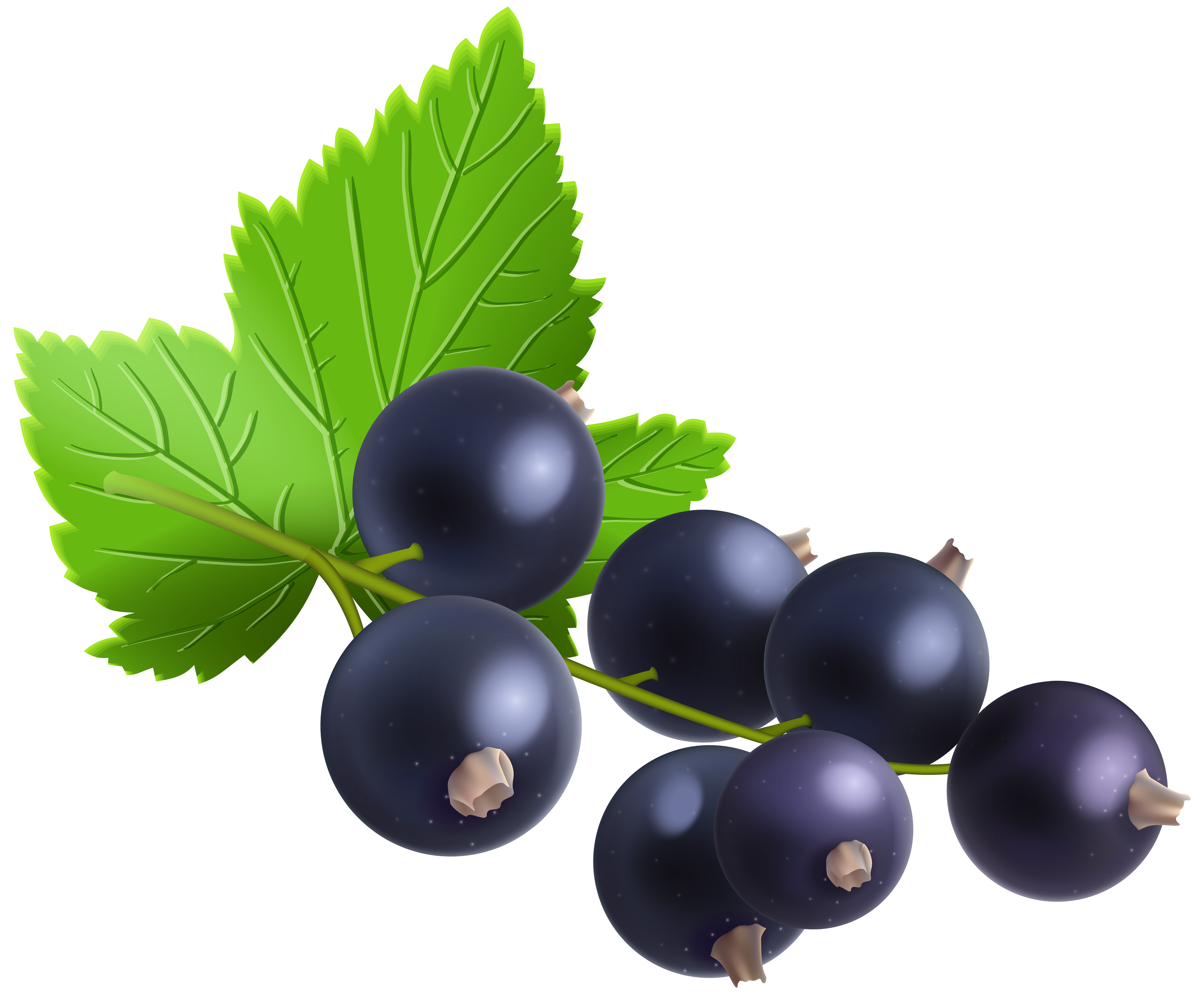Currants clipart Transparent PNG  Image View