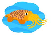 Mollusc clipart cuttlefish #2