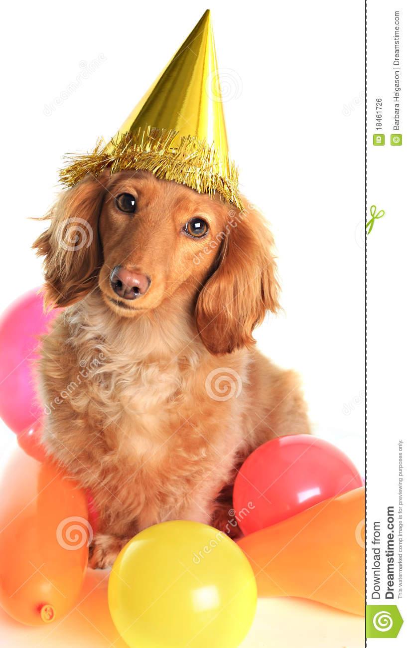 Birthday clipart dachshund Birthday birthday clipart dachshund (13+)