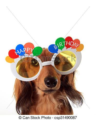 Birthday clipart dachshund  puppy of dachshund csp31490087