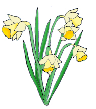 Daffodil clipart Clip Pictures daffodils Spring Clipart