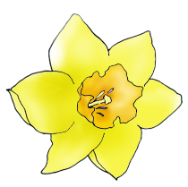Daffodil clipart Clipart Spring spring Pictures Spring