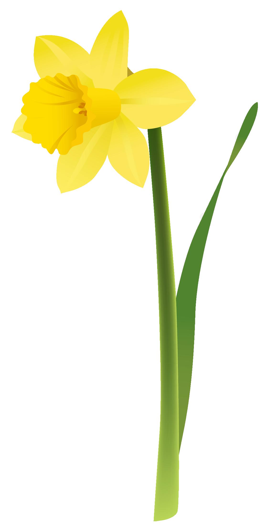 Daffodil clipart Free Tattoos Pinterest Daffodil Cliparts