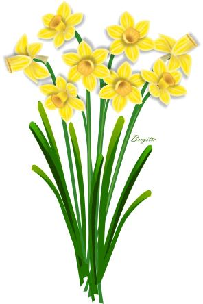 Daffodil clipart Flower Images Art Clipart Clip