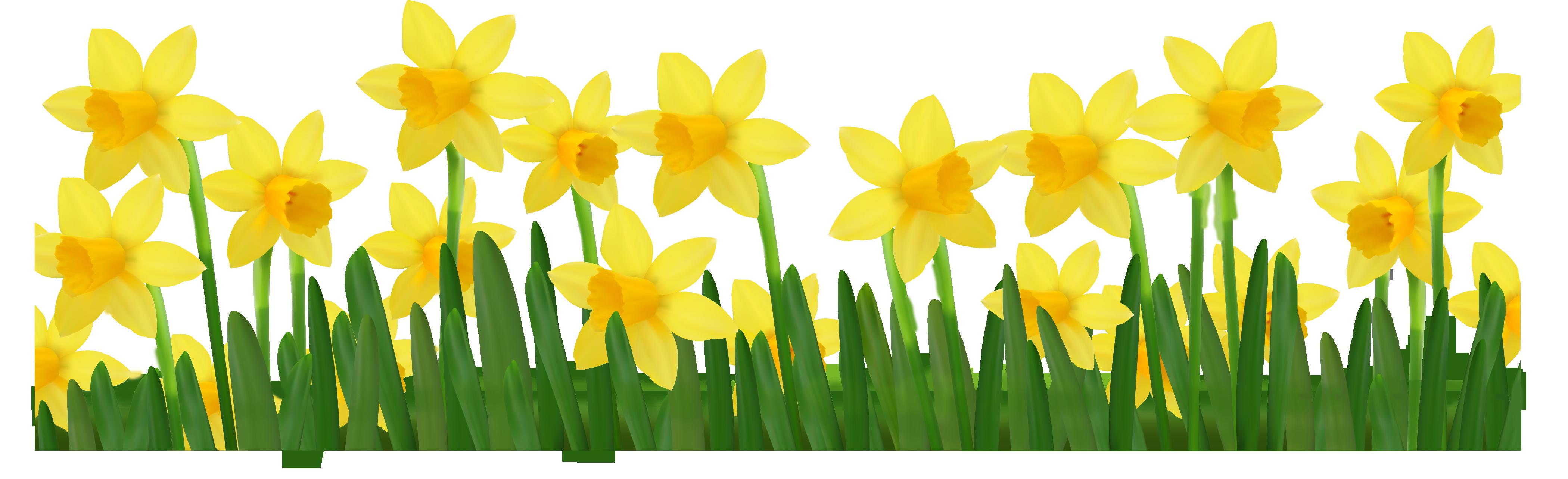 Background clipart daffodil Art Clip Clipart Art Clip