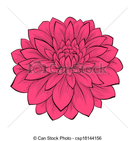 Dahlia clipart Beautiful drawn Stock  images