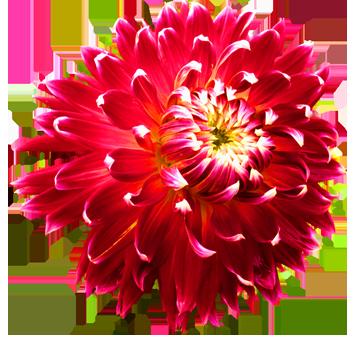Red Flower clipart flower head Blue Clip Flower art Gallery