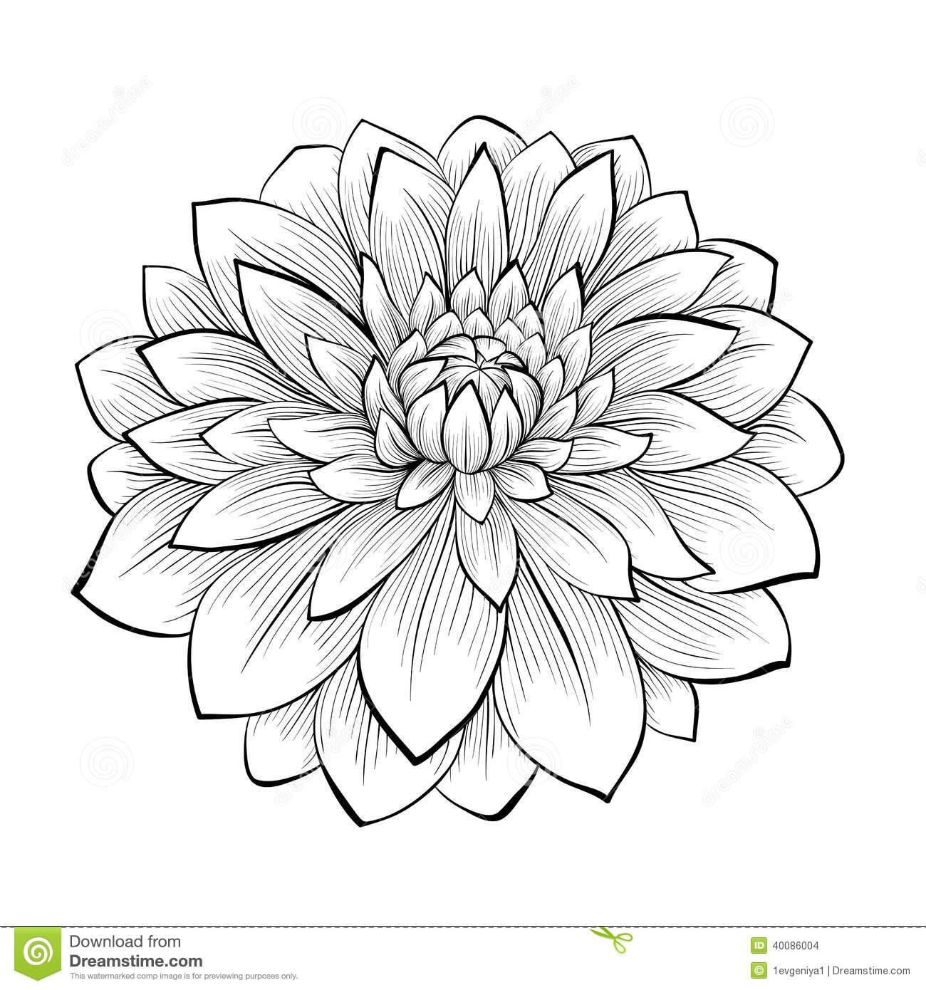 Beautiful clipart outline Clipart Dahlia cliparts Flower Outline