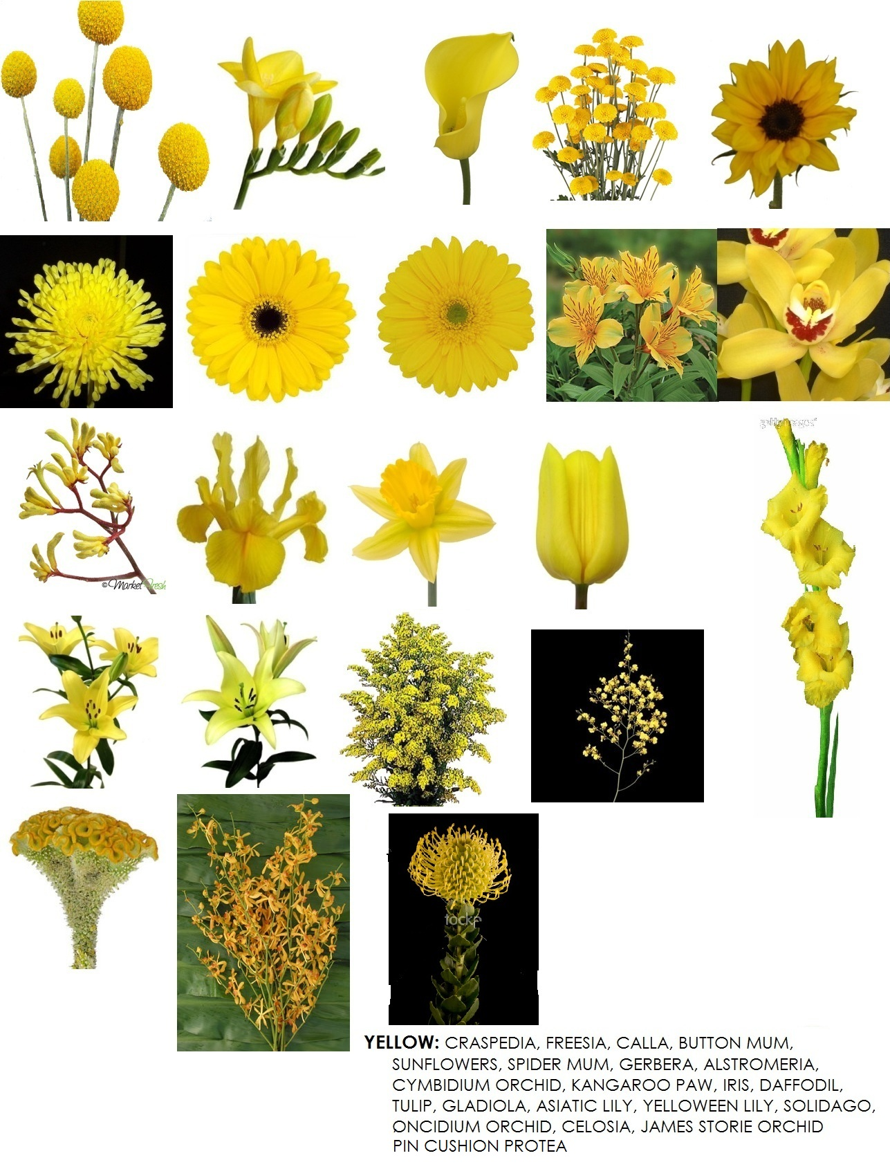 Yellow Flower clipart september flower Flowers Floral yellow Design yellow
