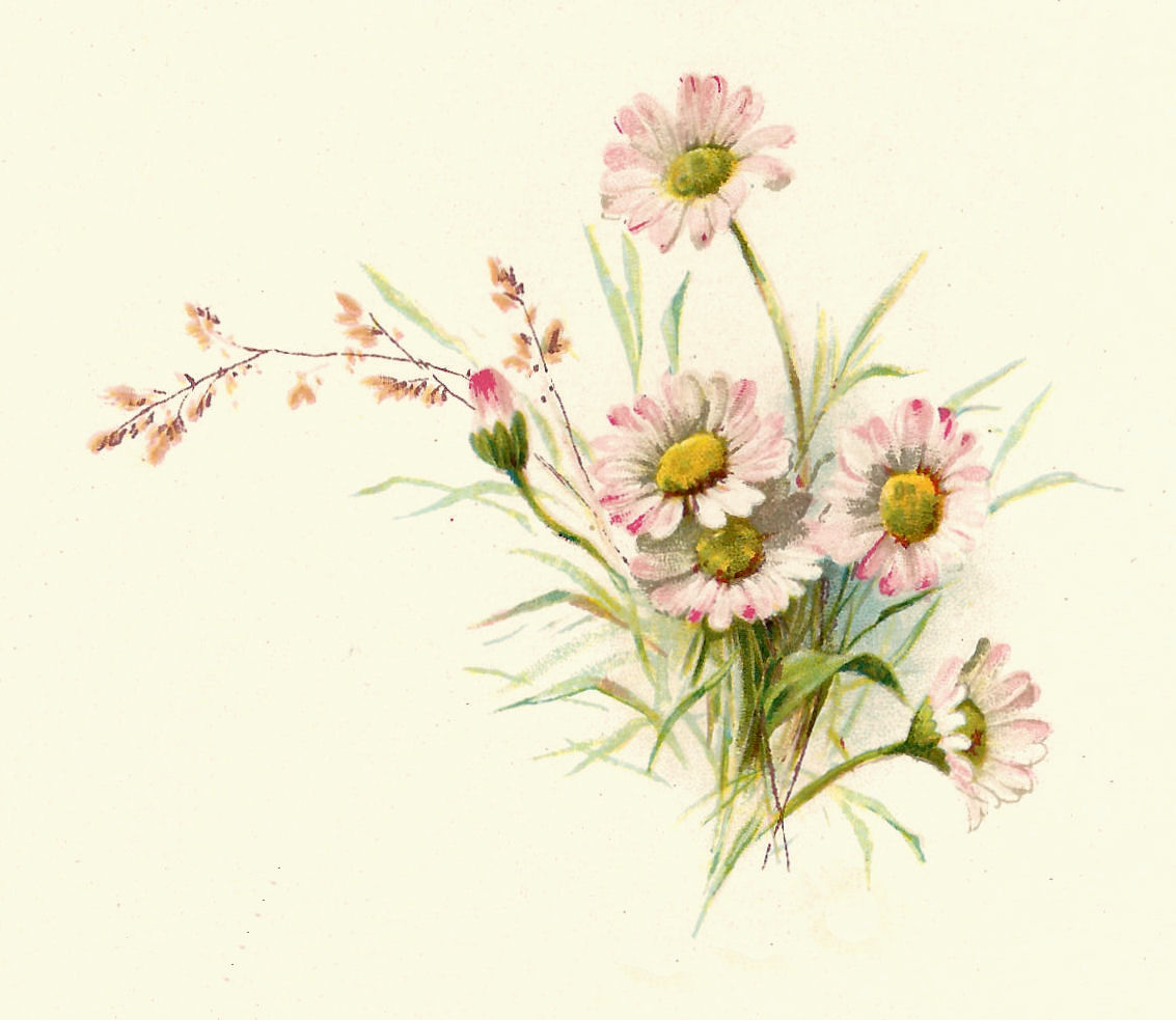 Daisy clipart botanical illustration #7