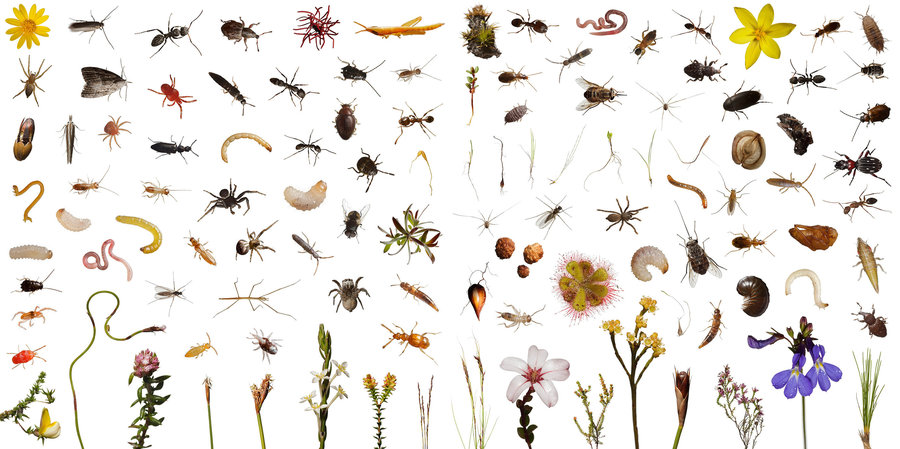 Plant clipart different kind plant Nothing Bee creatures and Everywhere