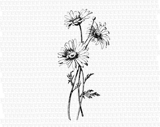 Wildflower clipart black and white Image Art Illustrations Flower Vintage