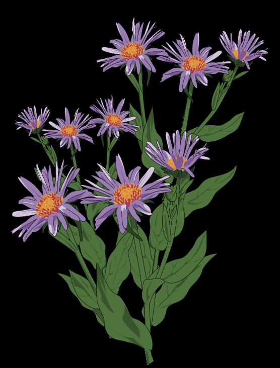 Wildflower clipart flowering plant Wild Art Use Flower Domain