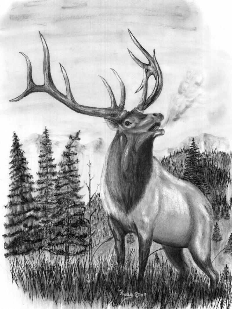 Horns clipart wildlife Horn Drawings Art http://www Art