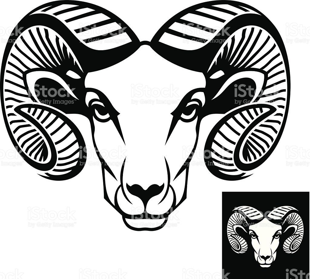Bighorn Sheep clipart bull elk Head Bighorn Vector Sheep sheep