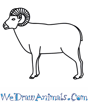 Drawn sheep abstract Bighorn a to How Draw