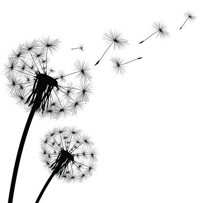Dandelion clipart Dandelion Dandelion Images Clip Vector