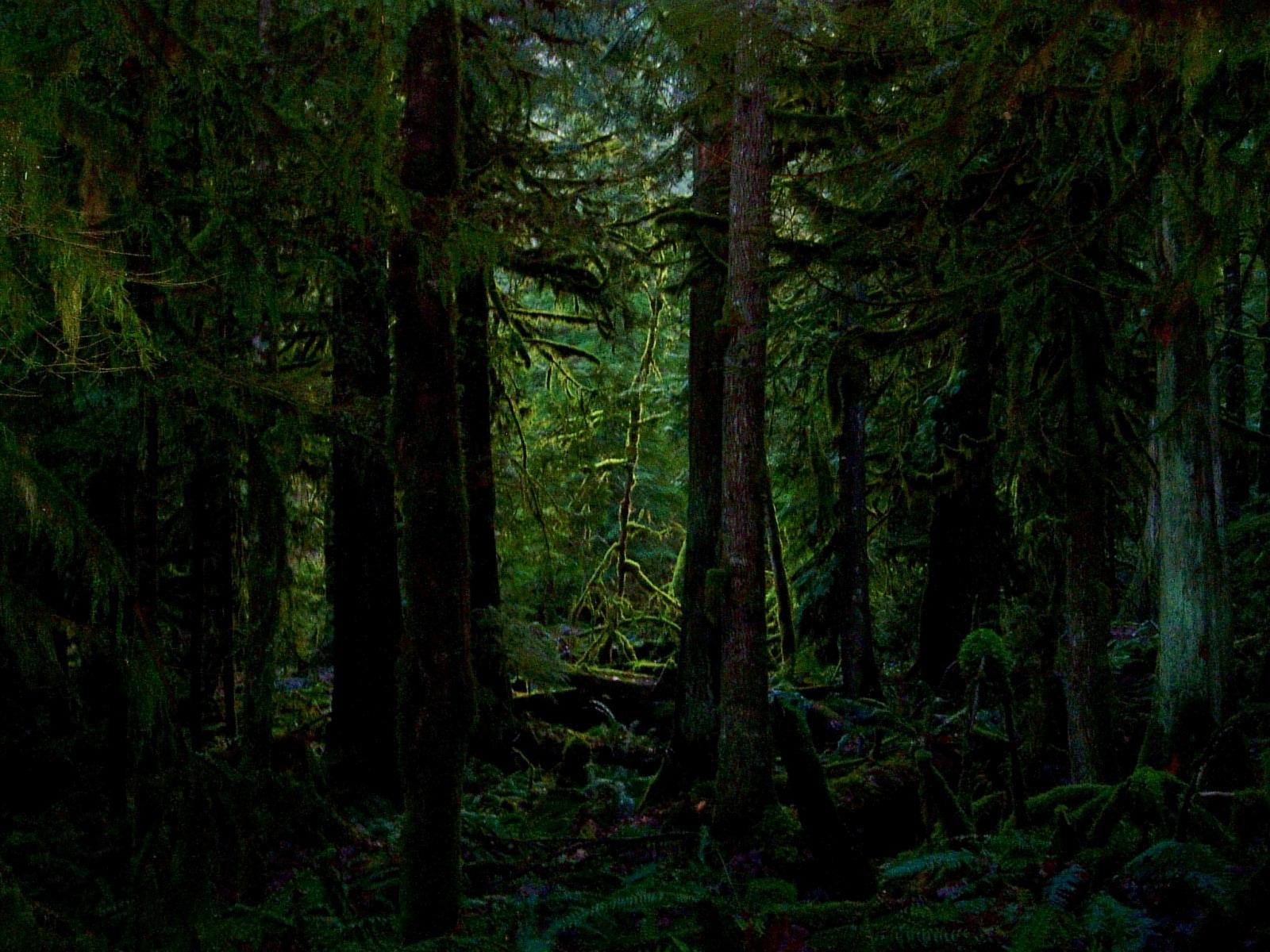 Pine Tree clipart forest wallpaper Wallpapers forest Dark com/dark com/dark