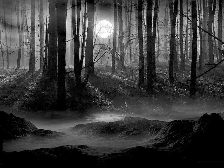 Dark Wood clipart creepy forest 31 images about best Pinterest
