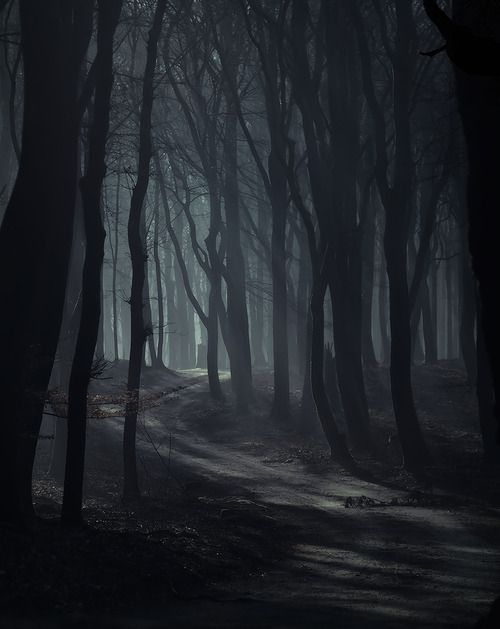 National Park clipart dark forest #11
