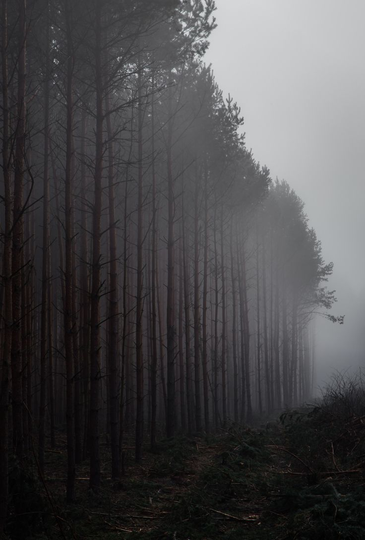 Dark Wood clipart haunted forest On Best Darkness and Find